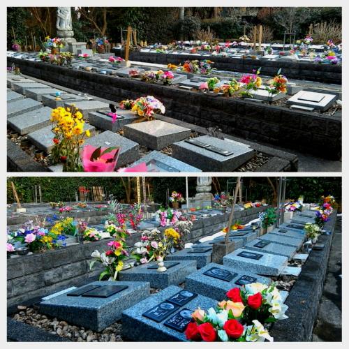 埼玉県越谷市のあすかの郷の訪問記|ペット火葬の …