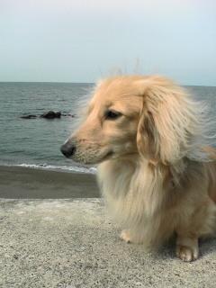 海に来ました_001.jpg