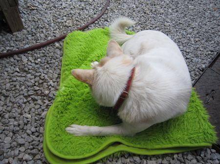 新しい毛布