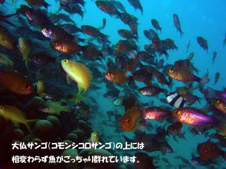 魚、魚、魚がごっちゃり群れてます。
