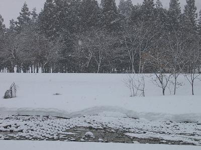 南魚沼市では湿った重たい雪が降っています