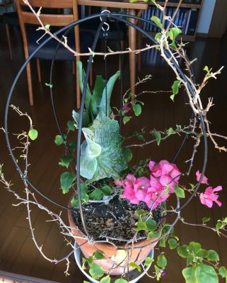 鳥かごのスパーバム
