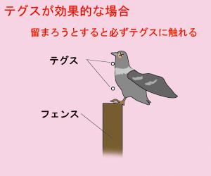 鳩よけ テグスが有効な場合