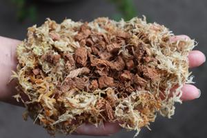 ウツボカズラ ネペンテス 用土 ベラボン 水苔