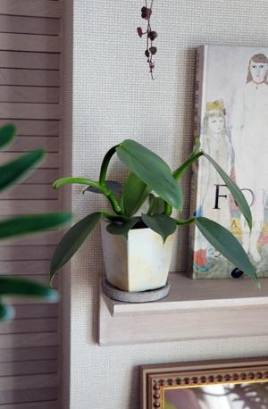植木鉢 ペイント フェレデンドロン シルバーメタル