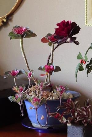 踊り葉牡丹 2年目 寄せ植え