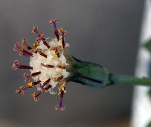 グリーンネックレス 花