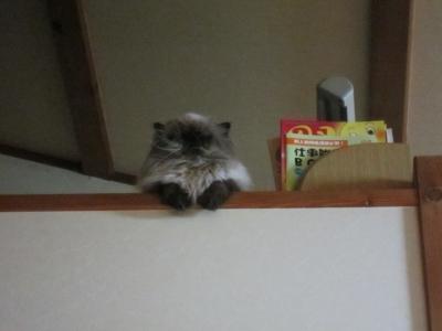 2階からこんにちは