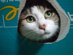 三毛猫さくら