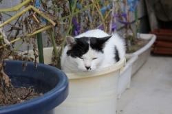 植木鉢ねこ