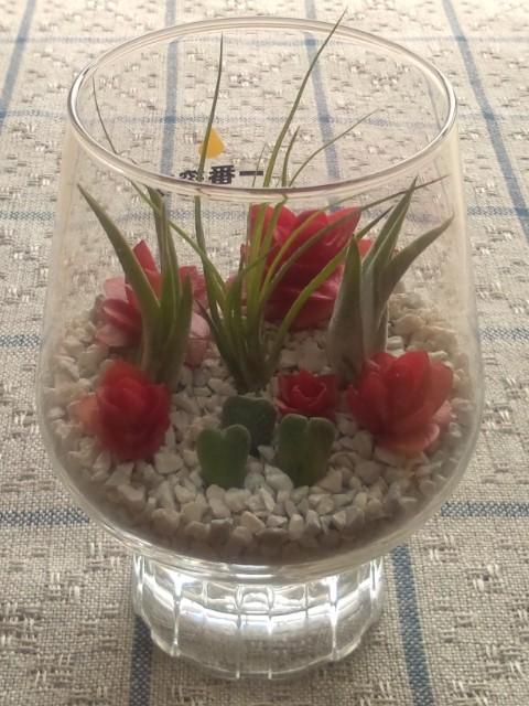 一番搾りグラス植物