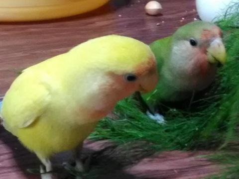 チコとキムニィ二ヶ月