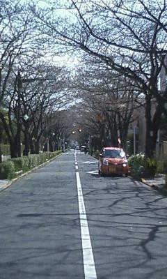 今日のさくら通り2011.03.31