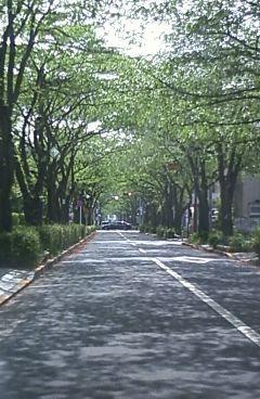 今日のさくら通り2011.04.27.