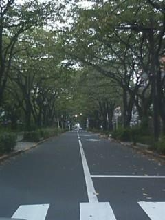 今日のさくら通り2011.09.28編