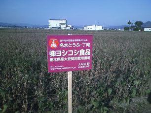 契約栽培大豆畑ー1