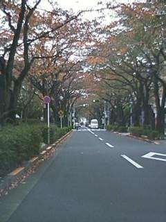 2011.11.18ーさくら通りの様子