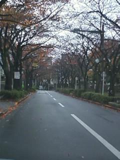 さくら通りのようす2011.12.01.