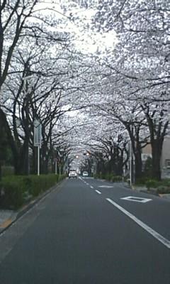 今日のさくら通り2013.03.25.編