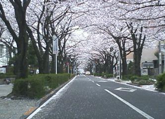 2013.03.29さくら通り1