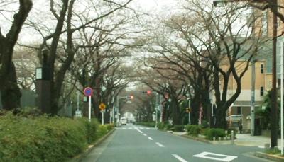 今日のさくら通り2014.03.26.