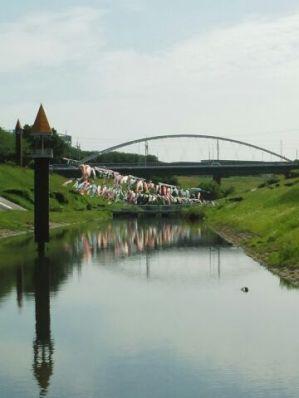 流川運河A鯉のぼり