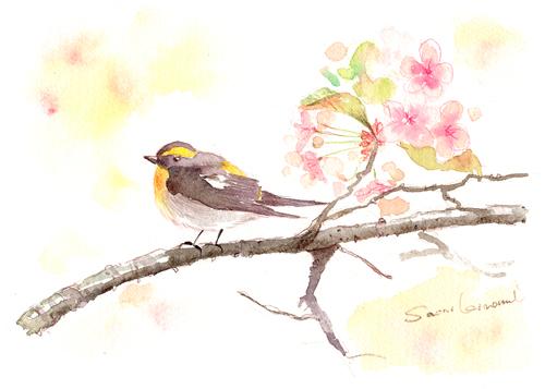 水彩教室 鳥