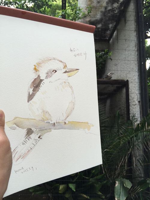 上野動物園 カワセミ