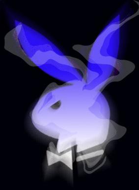 青ざめたウサギ