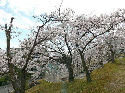 鳥見ヶ丘3