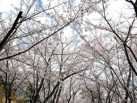 鳥見ヶ丘4