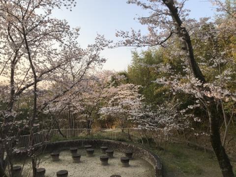 2019桜01