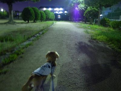ももと散歩