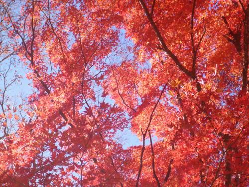 亀ケ城公園の紅葉
