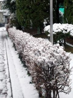 雪、積もった