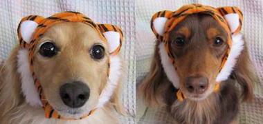 タイガーうめもみん♪