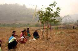 ラフ・ニ族の農耕儀礼