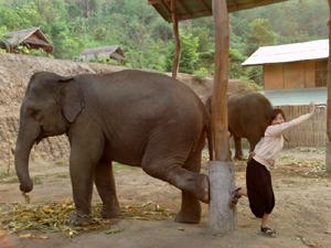 象が大好きな絵理菜