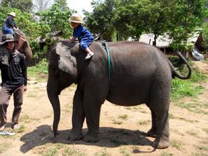 小象に乗るオイシ