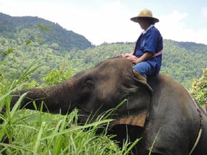 3.泥を見つけて遊びたがるのはやっぱり小象たち