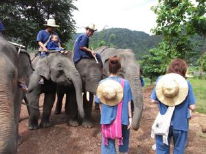 オイシもすっかり象使いの仲間入り