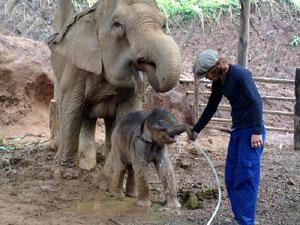 母象が飲んでいる水を自分も飲もうと必死の子象ファーサーイ