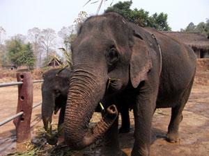 最高齢のジャンピーと4歳のヌン。ヌンはよくなついていた。