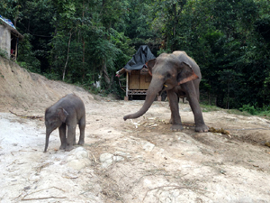 子象が遠くに行かないようにと注意するノンペン