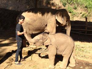 ファーサイとその象使いジャイ君