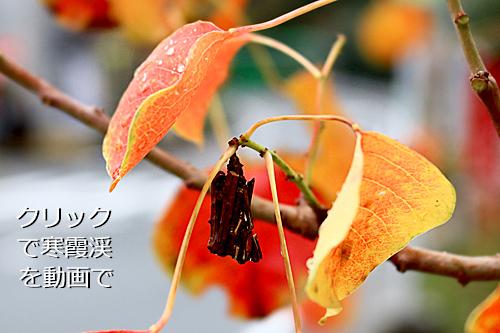 ミノガ(小豆島在住)
