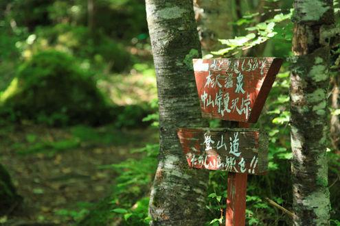 稲子湯から登山道へ
