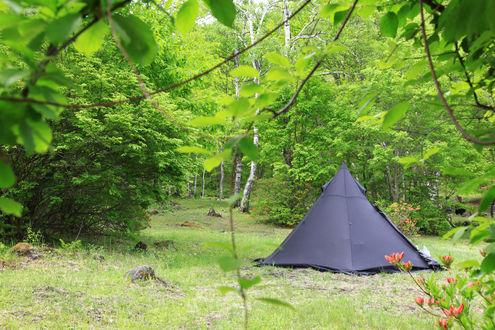 新緑の駒出池キャンプ場