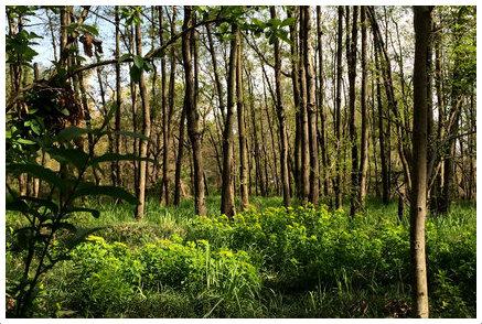 秋ヶ瀬公園 ピクニックの森