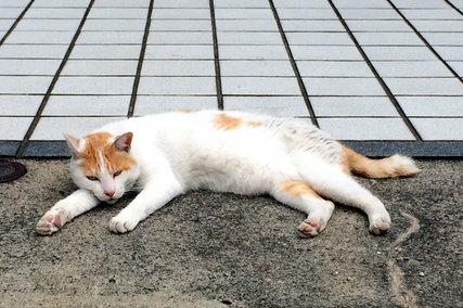 千駄ヶ谷の猫にゃん